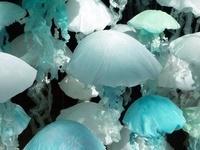THIS color... Tiffany? Aqua?