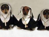 Wiener dogs! Gotta love 'em.