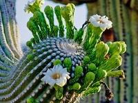 Cacti~ ⊰⋆ ⚜ ⋆⊱