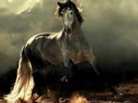 These are some of the most beautiful horses I have ever seen.  Love them all.  <3