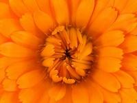 Orange you lovely!