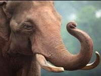 The most beautiful creature...the elephant!