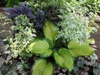 how to grow cilantro in florida