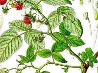 Herbs & Health