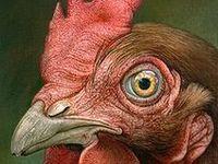 Chicken Art