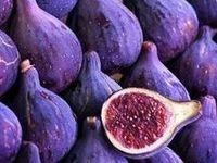 Purple/Lilac/Magenta