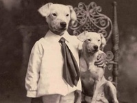 CURIOUS PET/ANIMAL PORTRAITS