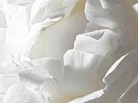 Interiors-White