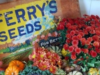 Vintage Seed Packets & Catalogs