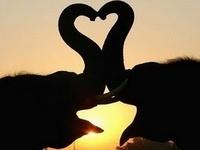 ♥Those Majestic Elephants