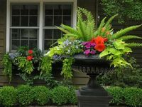 Gorgeous containers and window boxes.