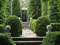 Hedges, Boxwood, yew and topiaries of all sizes.