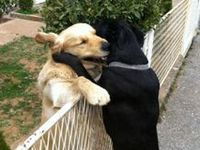 """""""A dog is the only thing on earth that loves you more than he loves himself."""" - Josh Billings"""