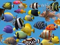 + images about Best Fish Aquariums on Pinterest Pet store, Aquarium ...