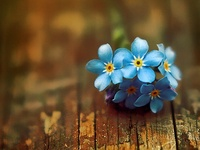 Forget~me~not...