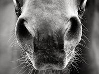Anything Horse