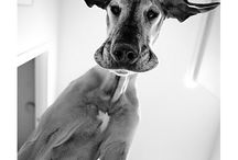 Animals / by Jess Wampach
