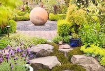 Plantas y flores para tu casa