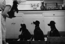 Poodles / by MimiCoco Poppy