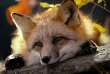~  Feelin Foxy ~