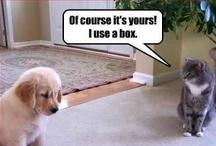 Animal Humor # 2