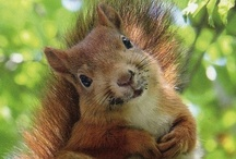 ~ Feelin Squirrely ~