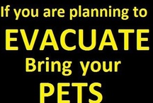 ~ People With Pets ~ Tips ~ Ideas