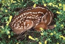 *Lovely My Deer*