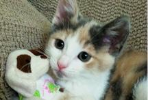 Awww Baby Kitty