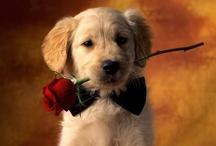 Awww Baby Puppy