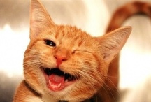 Oh Ya Pets Do Smile  / Smile Pets & Critter's