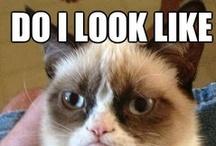 >^..^< ~ O Grumpy Cat ~ / Grumpy cats make me laugh    : ) >^..^<
