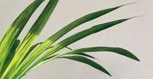 Plants / Greenery