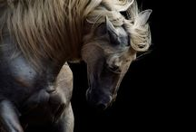Equine Love <3 / by Kristin Eve