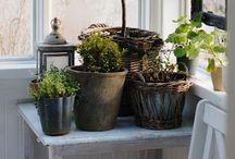 Gardening Ideas / easy gardening looks, tips & ideas