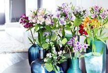 &ALSTROEMERIA / Gedraaide bladeren en prachtige, felgekleurde bloemen; dat zijn dé kenmerken van de Alstroemeria. Ze symboliseert vriendschap en dat maakt haar de perfecte bloem om aan je beste vrienden cadeau te geven.