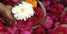 &AZIË / Tijdens onze reis around the botanical world doen we zes werelddelen aan in onze zoektocht naar botanische inspiratie. De meest bijzondere groene verhalen, de mooiste bloemenvazen, de leukste manieren om planten in gerechten te verwerken, fashion geïnspireerd op flora en wonen met bloemen en planten rondom de wereld. Dit keer reizen we af naar… Azië!