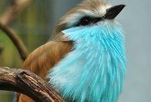 Bird Lust