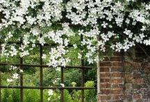 Garden ~ inspiration