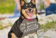 Weddings / Wedding Ideas & Venues