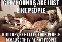 Greyhounds....my dream pup