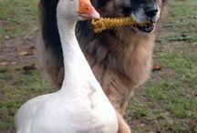 Unlikely friendships ... / Animal Love