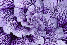 PURPLE! / ~purple is not only a very symbolic colour for me, it's my favourite colour!~ / by Kate