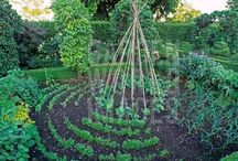 Garden: Produce yard & edibles / by Barely Poppins