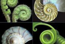 World of Spirals