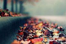 All the Seasons   Fall