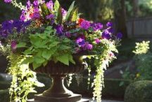 Outdoor-Pot and Container Ideas / Ideas and Tips / by Linda Finni