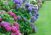 Landscape-Plant's For The Landscape / Idea's and Tips For A Small Yard / by Linda Finni