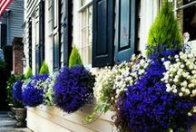 Outdoor-Window Box / by Linda Finni