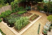 Outdoor-Vegetable, & Fruit Garden Designs / Creating & Design Idea's For A Garden. / by Linda Finni